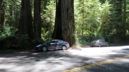 Car next to a redwood tree, Redwood NP, California.