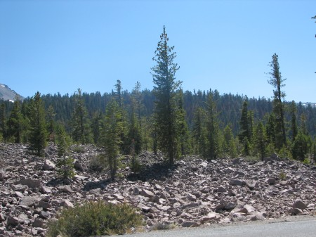 Devastated Area--trees alone in a rock field