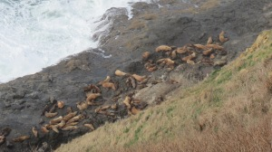 Group of sea lions from walkway.