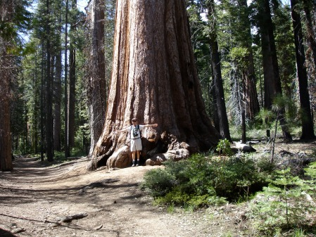 STANDING BY A SEQUOIA, MARIPOSA GROVE, YOSEMITE NP.