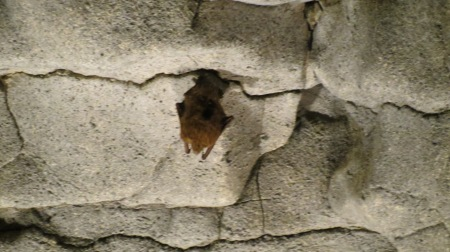 Bat on wall