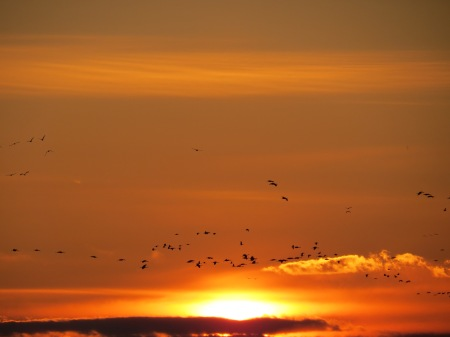 Cranes over the setting sun.