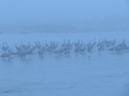 Fog cranes.