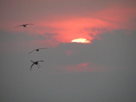 Birds and setting sun.