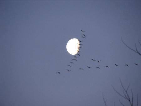 Crane Moon