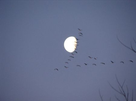 "ONE OF MY TRIPS ALONE IN THE BLINDS, FEBRUARY 2010.  ""CRANE MOON"""