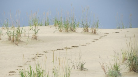 My footprints in the sand dunes at Kobuk Valley NP. It was one of those things that really is too expensive for the time spent, unless one factors in how much it meant to me, which was priceless.  What a lovely, quiet place.
