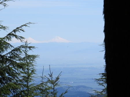 Douglas Fir on the right; The Sisters in the distance.  Oregon Coastal Range, but 30 straight line miles (50 km) from the ocean.