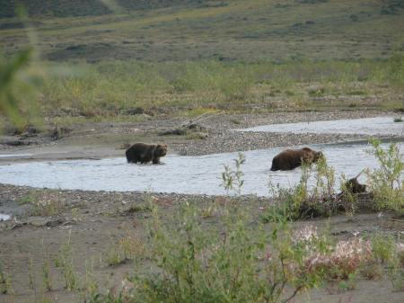 Cubs, Noatak River campsite, August 2010, age 61. This day mattered
