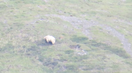 Bear, from 800 meters. He was the only one we would see.