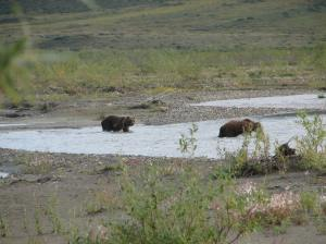Sow with one cub crossing a side stream on the Noatak. River.